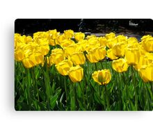 Tulips! Canvas Print
