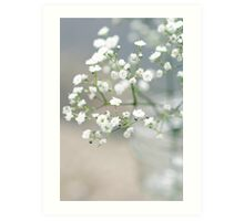 Baby's breath Art Print