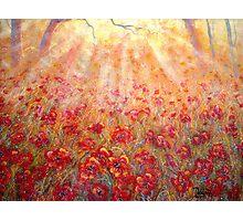 Warm Sun Rays Photographic Print