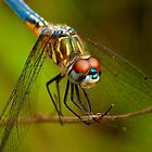 Backyard Dragonfly by Phillip  Simmons