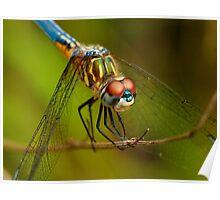 Backyard Dragonfly Poster