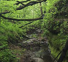 Path of Green by Adam Bykowski