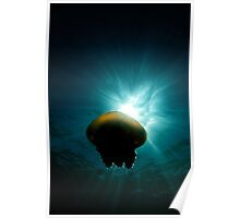 Canon Ball Jellyfish Poster