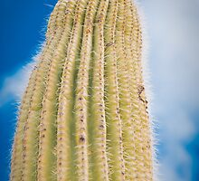 Thorns Major by rbnikonphoto