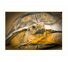 Desert Tortoise Art Print