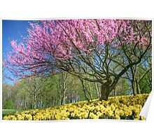 Colors of Spring Poster