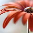 Daisy by Mandy Disher