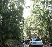 Fraser Island No. 6 by DanikaL