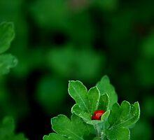 Hidden Ruby by Nublus13