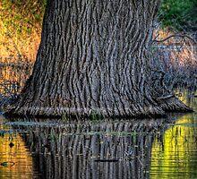 Tree Sheen by Bob Larson