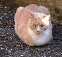 Muffin the cat by Nathaniel2