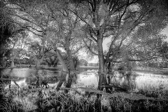 ReachingTrees by Bob Larson