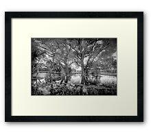 ReachingTrees Framed Print