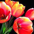 Tulips  by Vitta