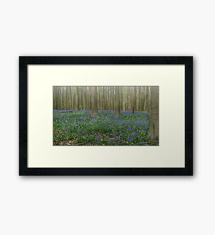 Hallerbos Blues Framed Print