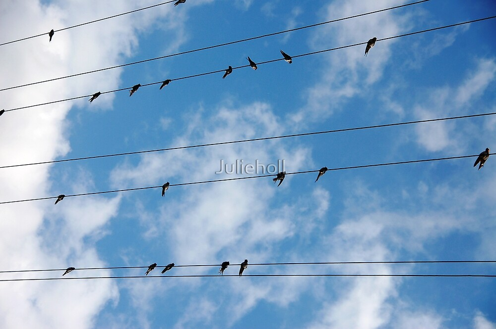 BIRDS ON A WIRE by Julieholl