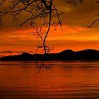 Sunkist Sunset by Gail Bridger