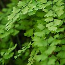 The Simple Fern by Kylie Roberts