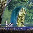 duck at the botanical gardens by elizabethrose05
