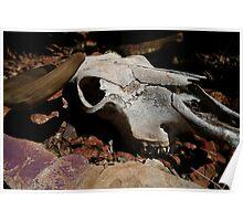 cattle skull Poster