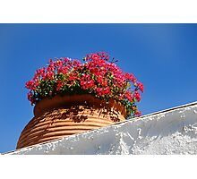 Wall Flowers. Photographic Print