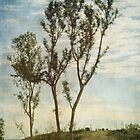 Trees by Lydia Marano