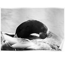 Silver Sea Bird Poster