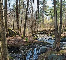 Spring stream in the forest by marchello