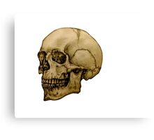 Anatomical Adult Skull Canvas Print