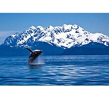 Whale breach Photographic Print