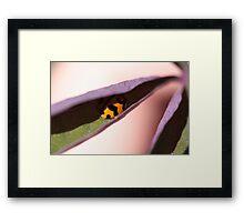 """Ladybug Hide Out - (macro backyard)"" Framed Print"