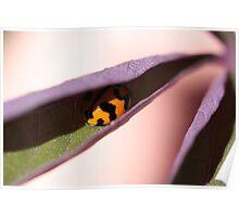 """""""Ladybug Hide Out - (macro backyard)"""" Poster"""