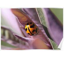 """""""Ladybug on the Run"""" - backyard macro"""" Poster"""