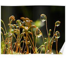Light bubbles Poster