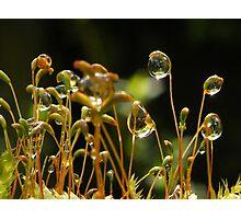 Light bubbles Photographic Print
