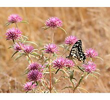 Beauty and wildflowers Photographic Print