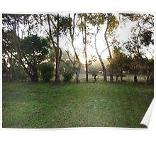 Sunrise through the Mist on Stokes' Farm - Kirkstall, Vic Poster
