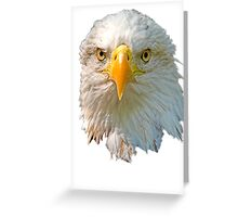 Head of Bald Eagle Greeting Card
