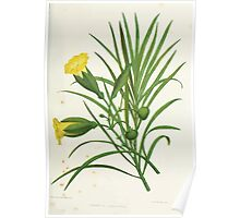 Familiar Flowers of India With Colored Plates, Lena Lowis 0061 Thevetia Nersifolia Poster