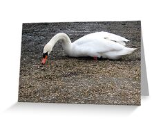 99 - SWAN AT QEII LAKE, ASHINGTON (D.E. 2010) Greeting Card