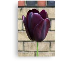 Black Queen .. Tulip Canvas Print