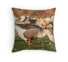 Goose in the Sun Eating Throw Pillow