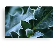 Winter Frost on Holly Canvas Print