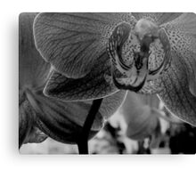 Hot House Orchid  ^ Canvas Print
