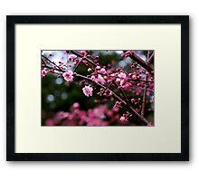 More blossoms Framed Print