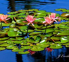 Pink Lillies on the Pond of Blue by Julie Everhart