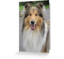 Smiling Collie Greeting Card
