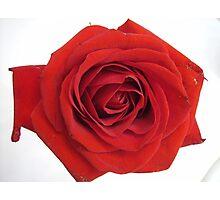 Vermillion Rose Photographic Print