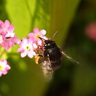 Bumblebee lunch II by RFK C