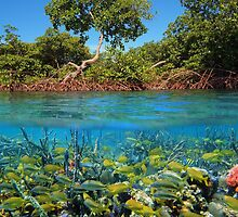 Split image mangroves and shoal of tropical fish by Seaphotoart